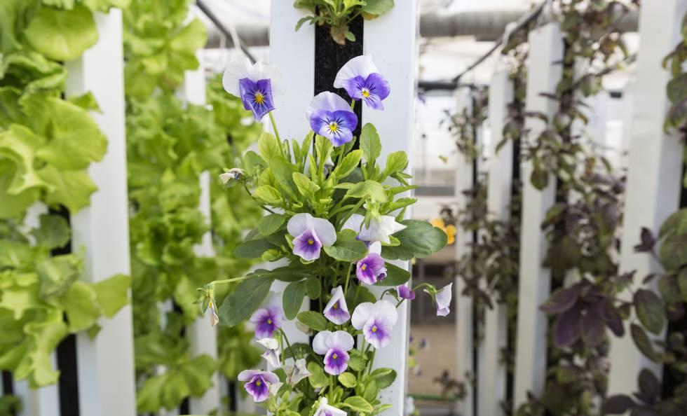 Un jardín vertical.