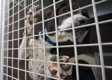 Seis meses de cárcel por maltratar y abandonar un perro