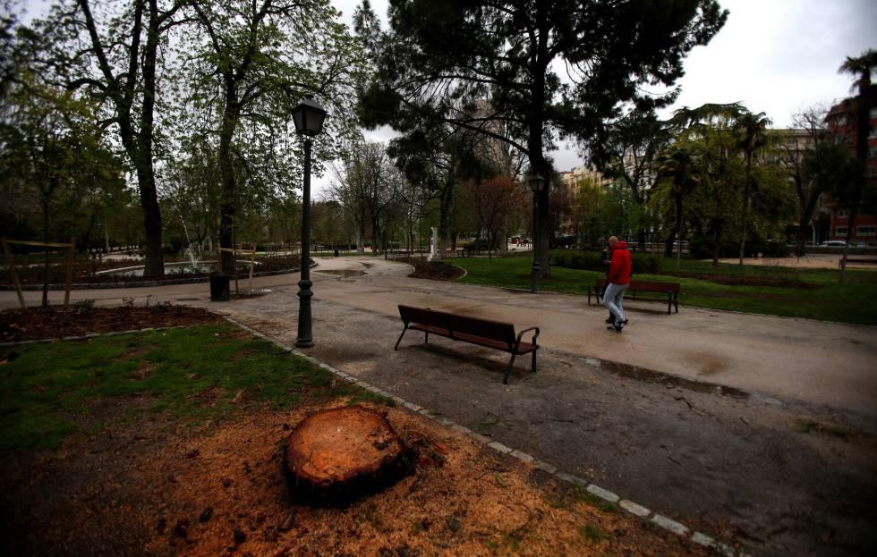 La espinosa gestión de dos millones de árboles | Madrid | EL PAÍS