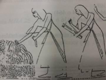 Escribas egipcios contabilizando los penes arrancados al enemigo, una forma eficaz de contar las bajas causadas. Se contaban también las manos pero había que dividir por dos.