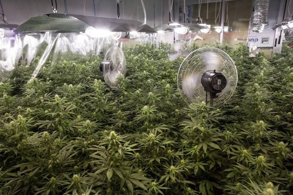 Decomisadas dos toneladas de hachís y marihuana en un almacén de ...