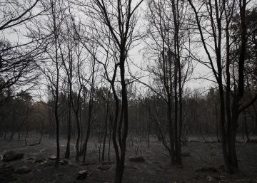 La catástrofe de 2017 empuja a la Xunta a ampliar a octubre la alerta de incendios