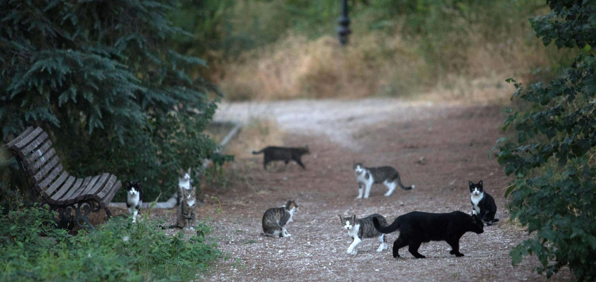 Spain's Licensed Cat Ladies