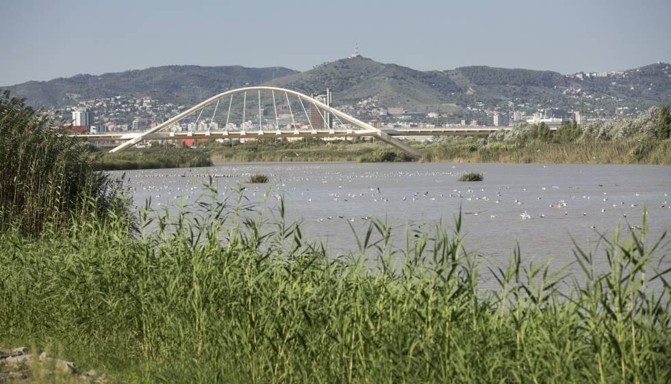 [El Confidencial] Escándalo medioambiental en Cataluña 1538928473_857006_1538928720_noticia_normal