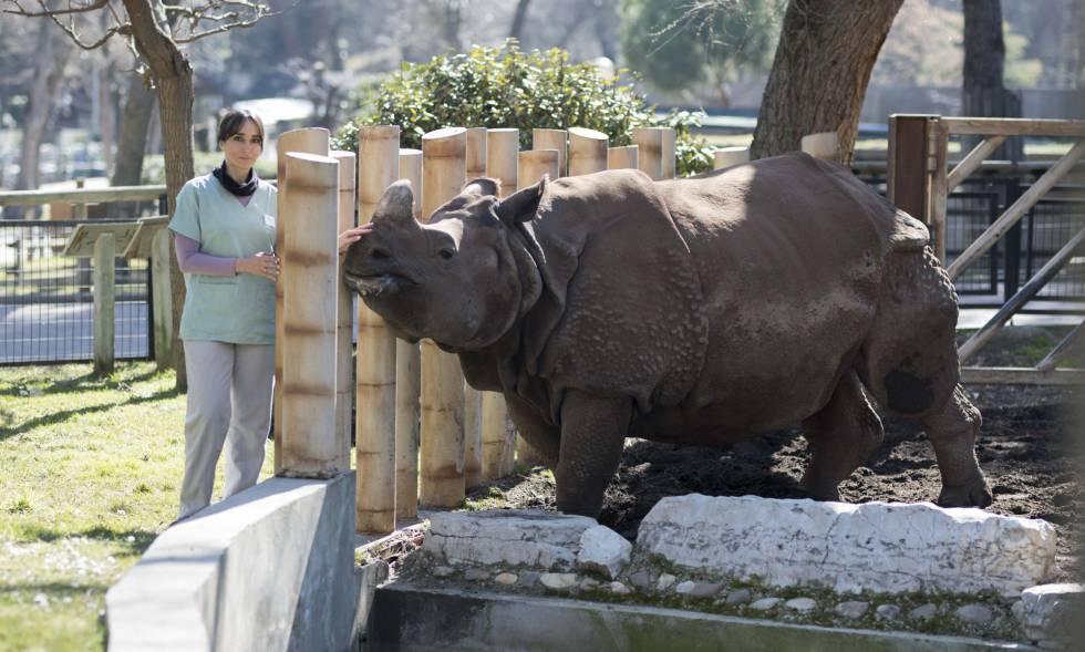 Los Zoos Se Han Transformado En Centros De Conservación E Investigación Madrid El País