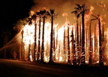 Miles de palmeras arden en Elche en cuatro incendios de huertos