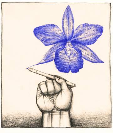 Ilustración de Ana Juan.