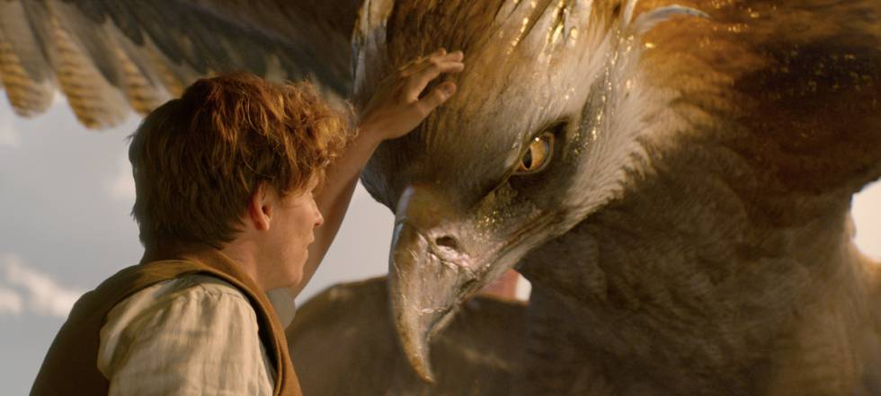 Harry Potter: 'Animales fantásticos' y la historia como 'fan-fiction' |  Cultura | EL PAÍS