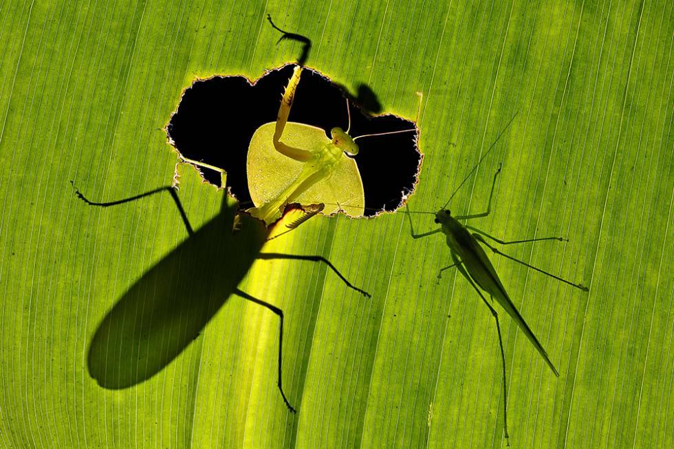 'Deadly Fate', foto galardonada con el LUX Plata en la categoría Paisaje y Naturaleza.