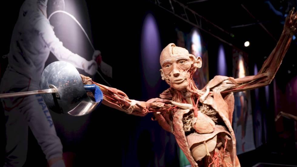 Exposición \'Real Bodies\': La clase de anatomía que enferma a los ...