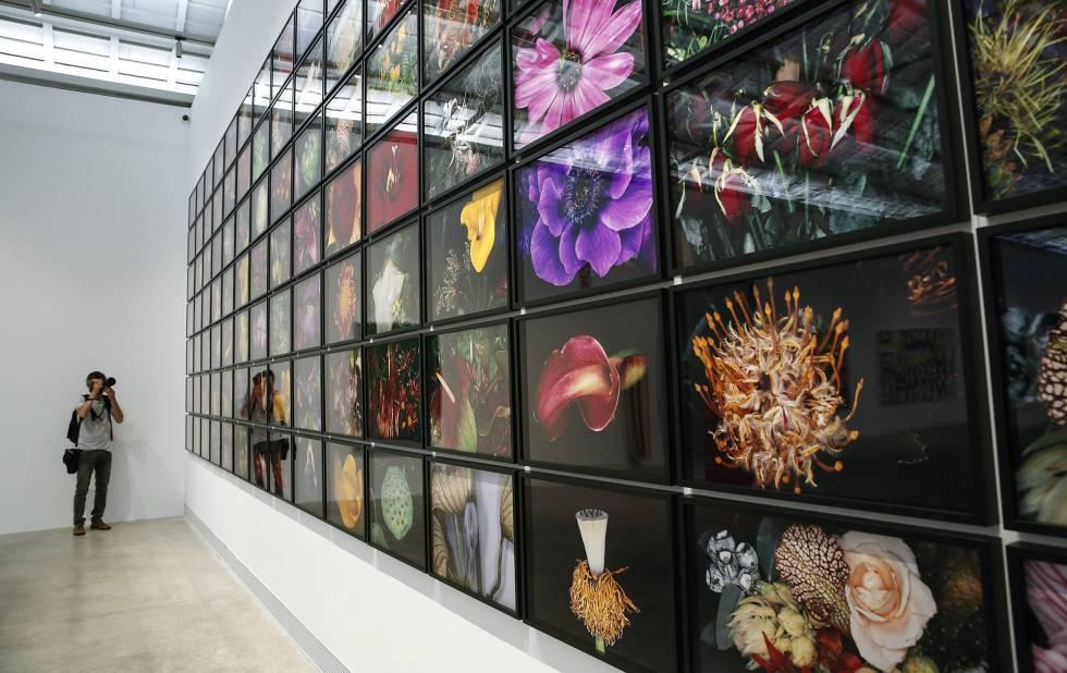 'Flower Rondeau', una serie de 119 fotografías de flores (la fundación tiene 20 más) del japonés Nobuyoshi Araki.