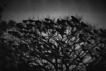 Ravens, Kanazawa, 1977