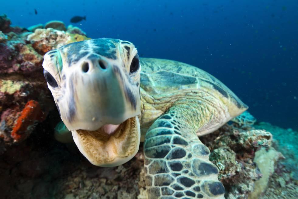 'Planeta Azul II': Carta de amor a los océanos