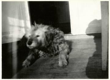 Fips, el perro de Munch, 1930