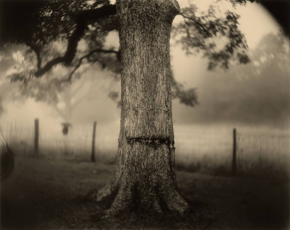 Deep South, (Scarred Tree), 1998