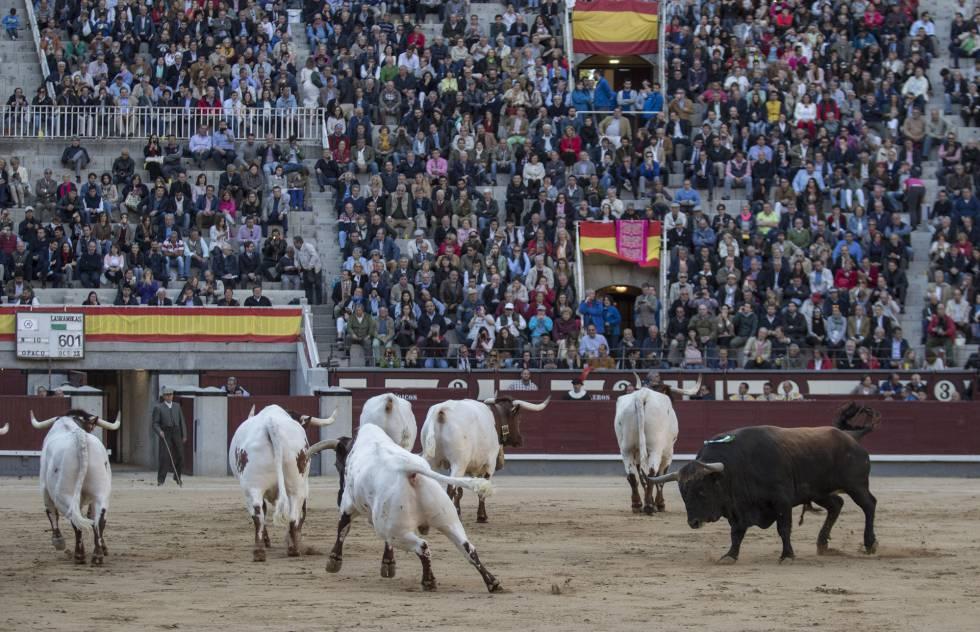 El cuarto toro fue devuelto a los corrales entre las protestas del público.