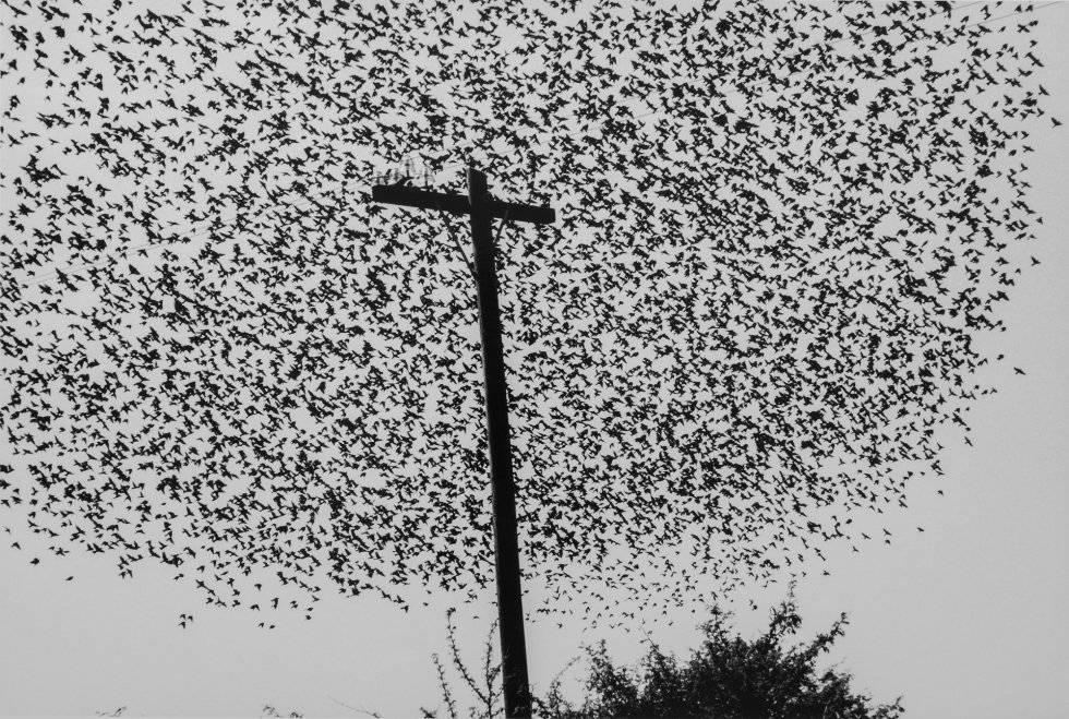'Pájaros en el poste'. Carretera a Guanajuato, México, 1990.