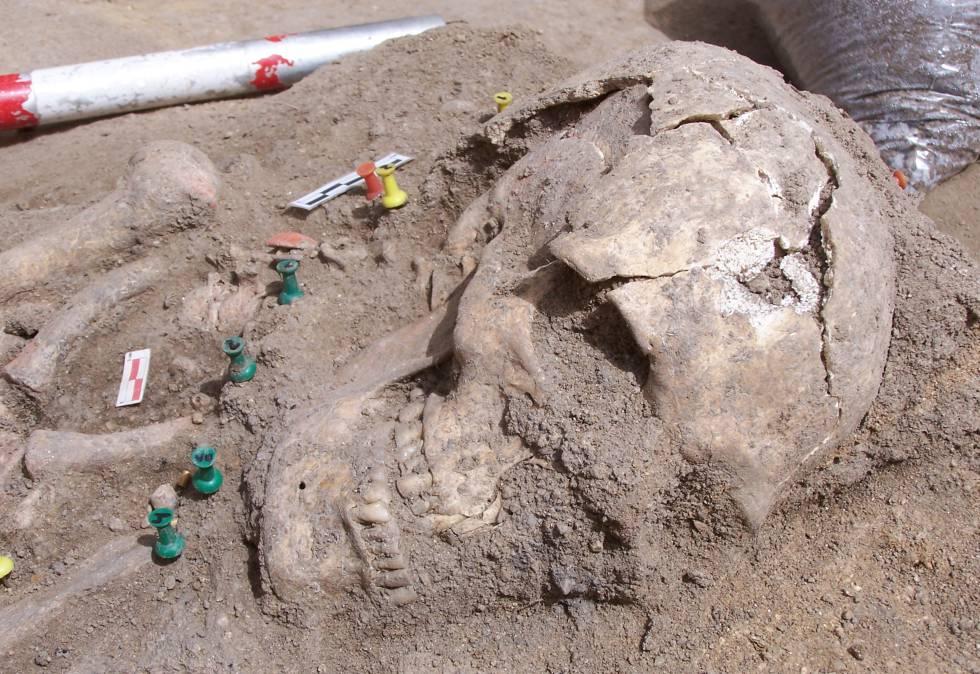 Cráneo de la gran dama encontrada en el yacimiento de Humanejos.