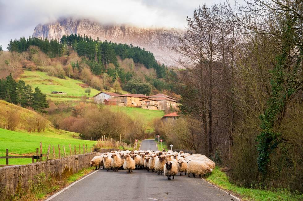 La literatura española vuelve al campo