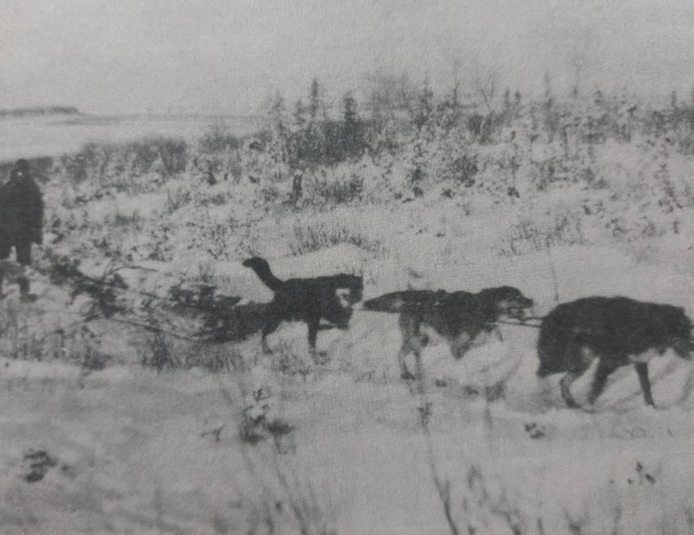 Un Mountie con su trineo en la persecución.