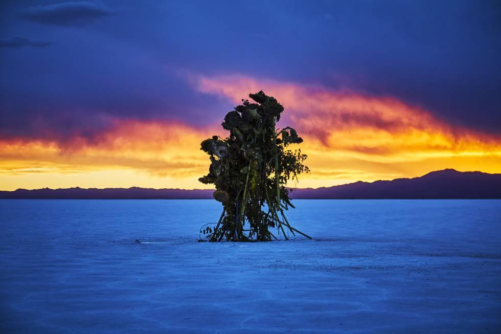 'Flor de sal' de Makoto Azuma, en las Salinas Grandes, provincia de Jujuy.