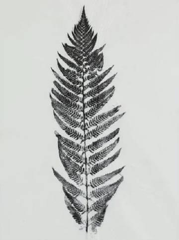 Una hoja de Oriol Vilapuig en su exposición en el MNAC.