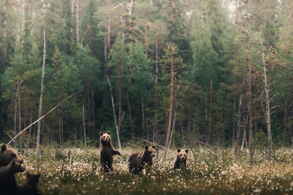 Accidentalmente encontrado en el bosque 1