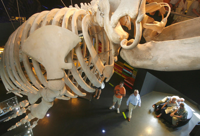 Ballenas que yacen bajo tierra edici n impresa el pa s - Aquarium donosti precio ...