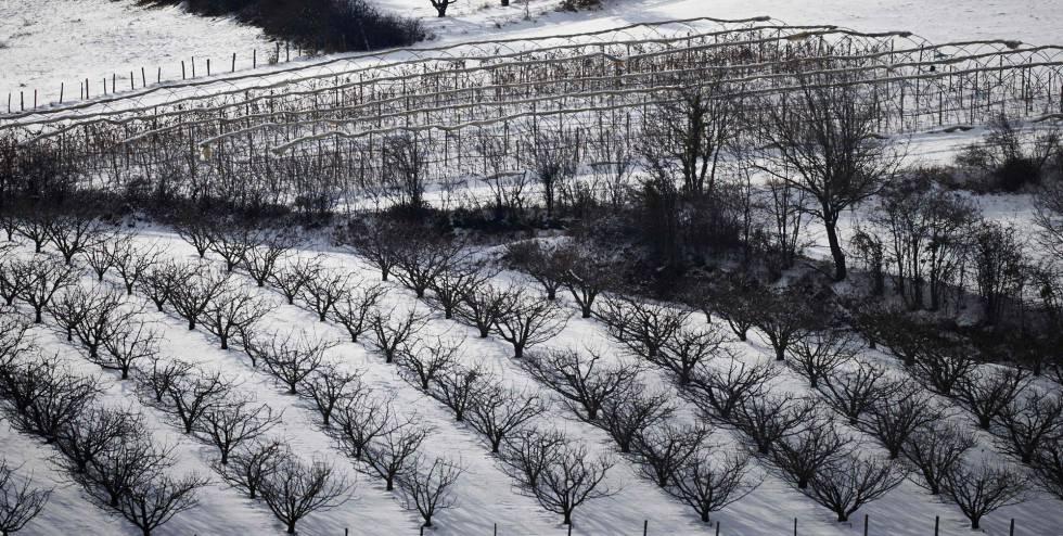 Las heladas arrasan los cultivos hortícolas en la UE y disparan los precios  | Economía | EL PAÍS