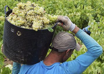 Poor grape harvest will mean less wine in Spain, but of better quality