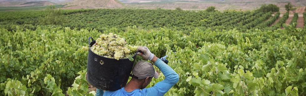 In some areas of Spain, wine production could be down by two-thirds.