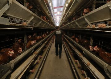 How Spanish eggs have avoided European pesticide crisis