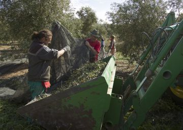 After US unfair competition claim, Spanish olive sector prepares its defense