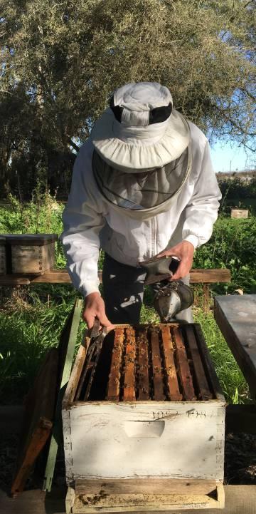 Un apicultor en Ranchos, en la provincia de Buenos Aires.