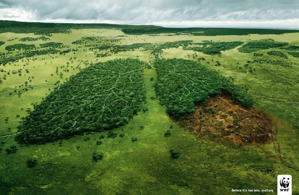 Los pulmones de nuestro planeta son nuestros pulmones