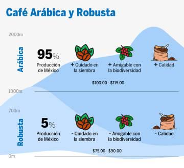 Diferencias entre el café arábica y robusta.