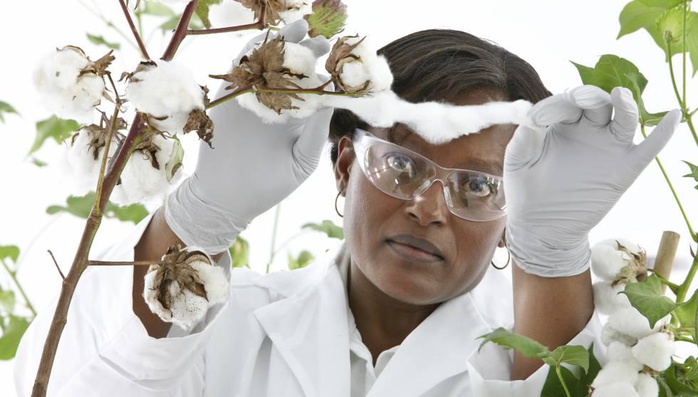 Una investigadora de Bayer analiza un cultivo de algodón. Abajo, Jesús Madrazo, ejecutivo de Crop Science.