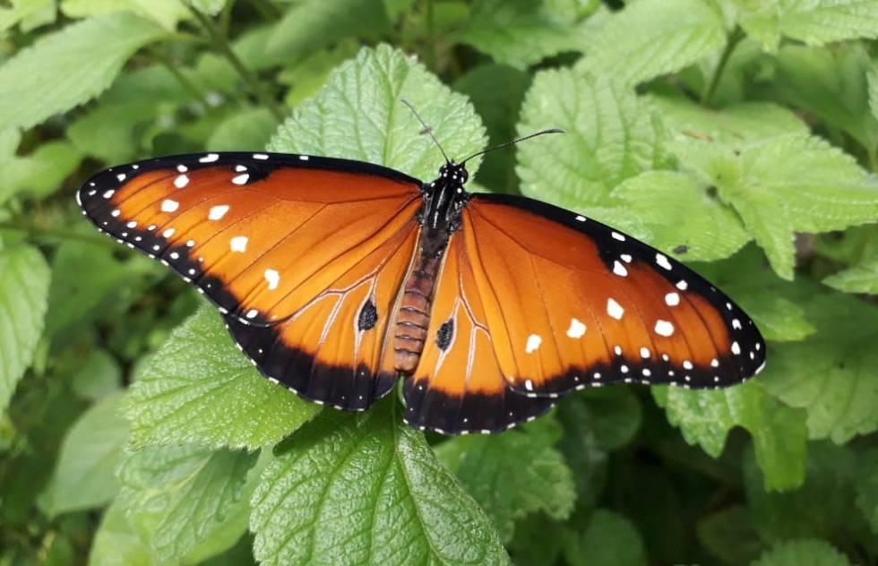 Costa Rica se convierte en líder mundial en la exportación de mariposas