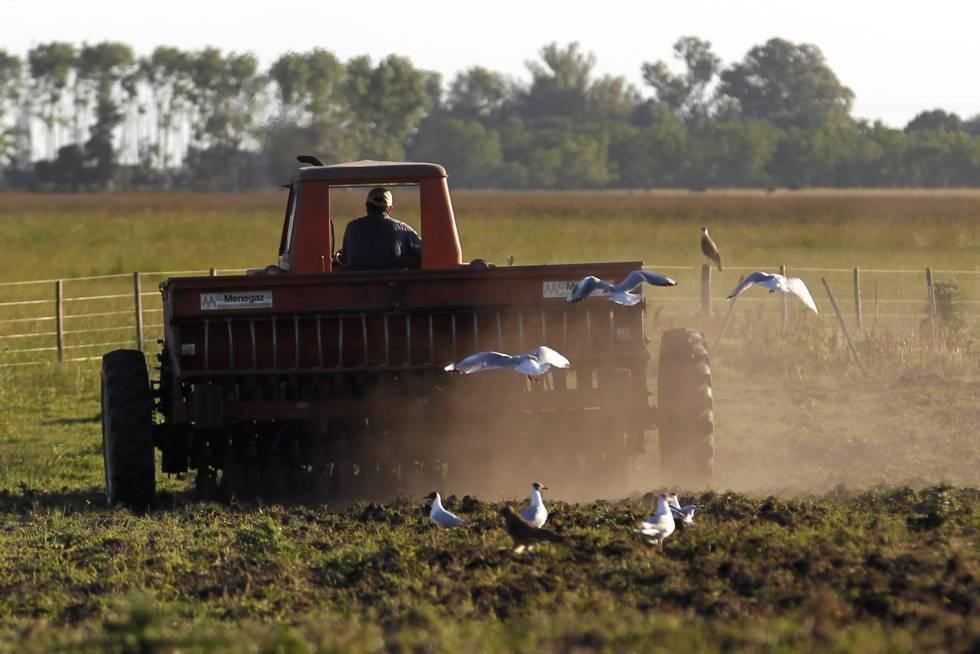 Un agricultor conduce un tractor en una plantanción de sorgo de la provincia de Buenos Aires.