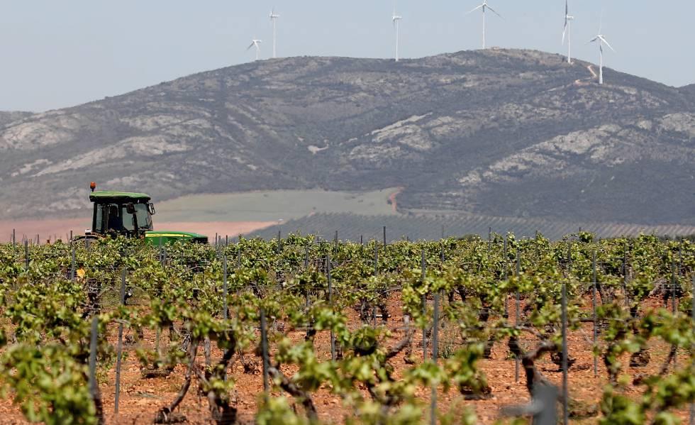 Un tractor recorre un viñedo en Villanueva de los Infantes (Ciudad Real).