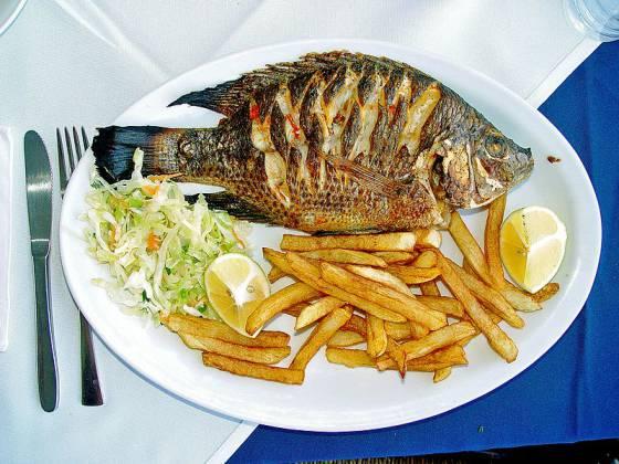 Son la perca o la tilapia mejores que el panga el for Criadero de pescado tilapia