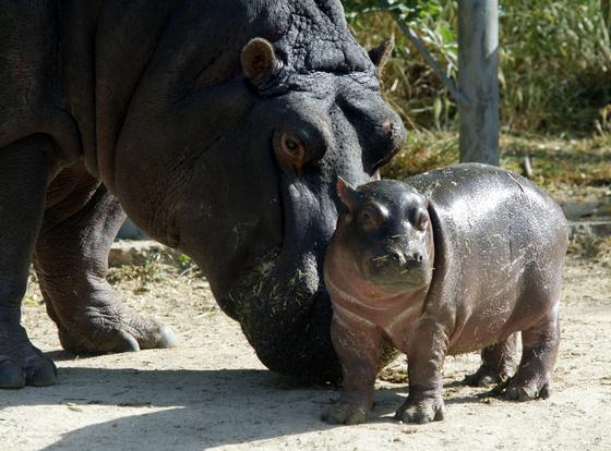 Los 10 mejores sitios para ver animales en semilibertad blog viajero astuto el pa s - Animales salvajes apareandose ...
