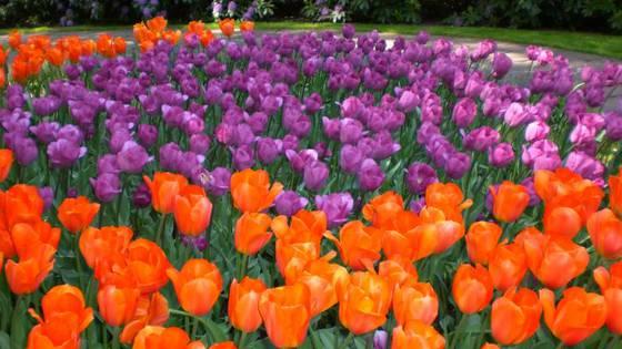 Citas Con Las Flores Los 20 Mejores Lugares Para Recibir La
