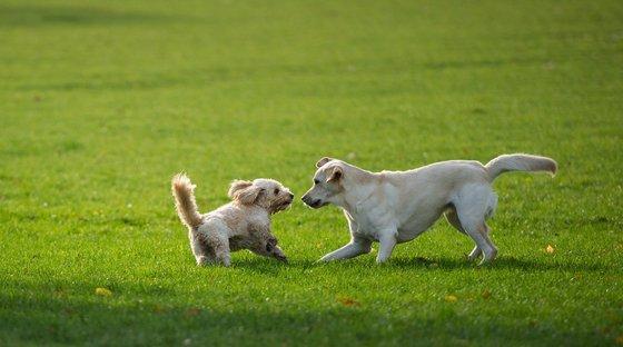 Lo Que Nadie Me Dijo Antes De Tener Perro 3 10 Cambios En Mi Vida