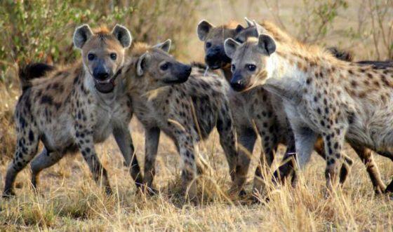 Algumas lições sobre liderança extraídas do mundo animal