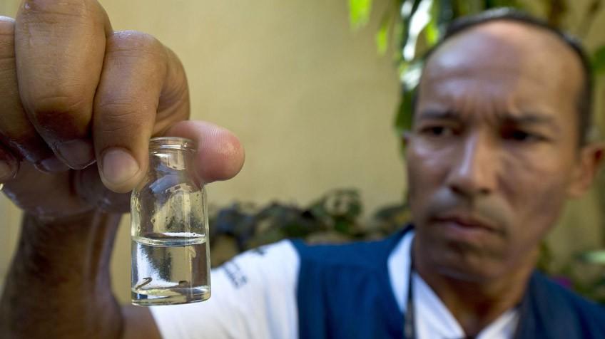 O medo do zika vírus é exagerado?