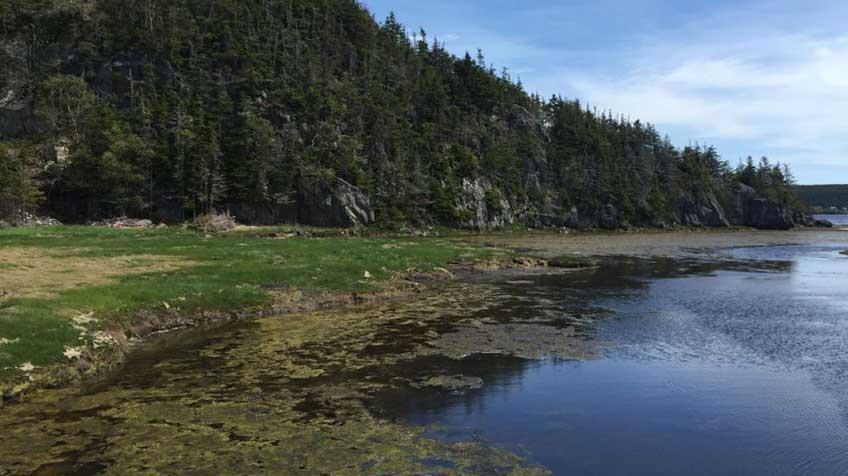 As zonas úmidas de Terra Nova, no Canadá, registraram uma das maiores elevações regionais do nível do mar.