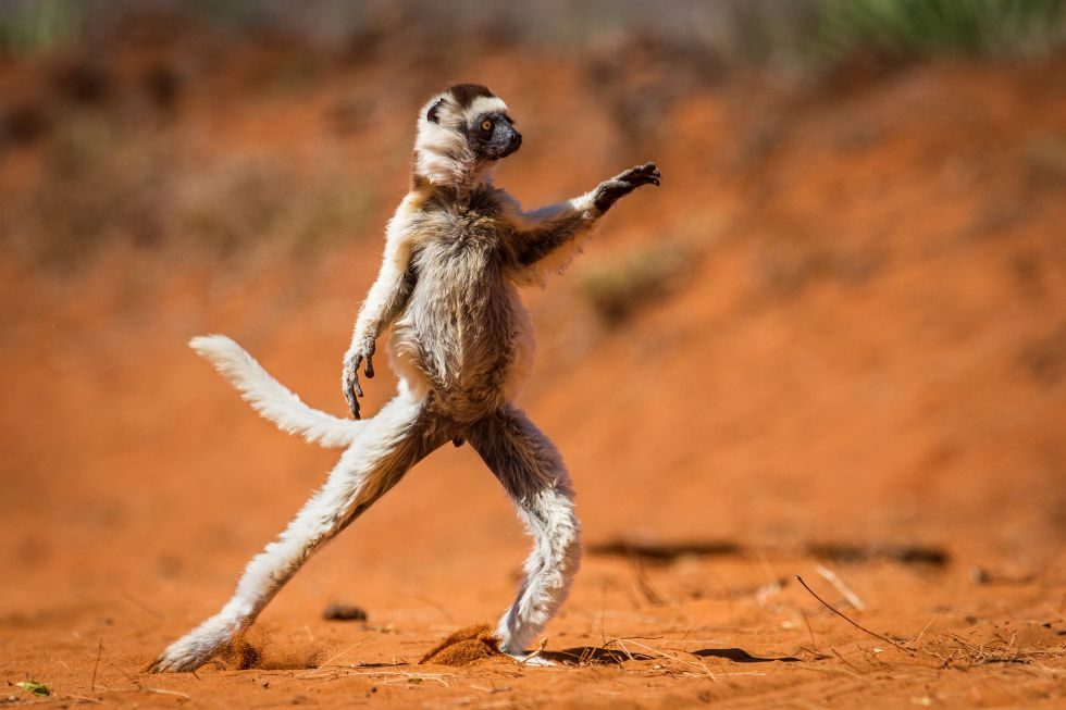 una web selecciona las fotos de animales ms juerguistas