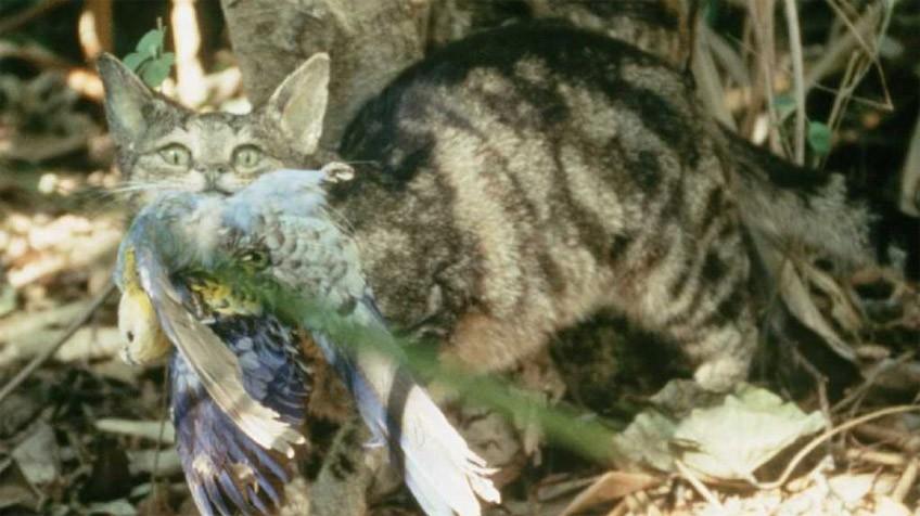Guerra científica contra los gatos