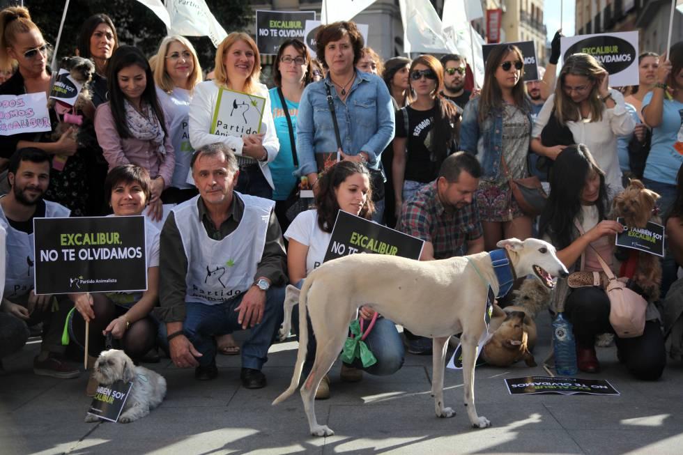"""Teresa Romero, la auxiliar de enfermería que se infectó de ébola en España, participa una manifestación convocada por el Partido Animalista (PACMA), por el sacrificio de su perro """"Excalibur""""."""